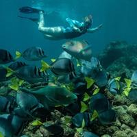 Top Snorkel Spots in the Galápagos Islands